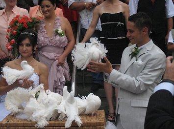 Porumbei albi nunta Nunta Iasi
