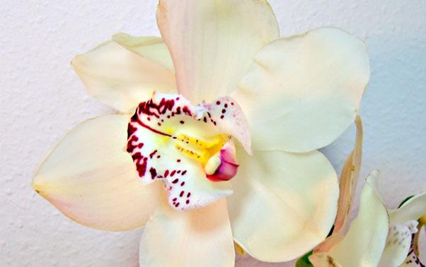 Orhideea in decoratiunile de nunta